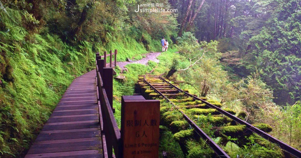 森林找17度夏天:太平山見晴懷古步道,天氣涼爽、呼吸芬多精避暑好去處