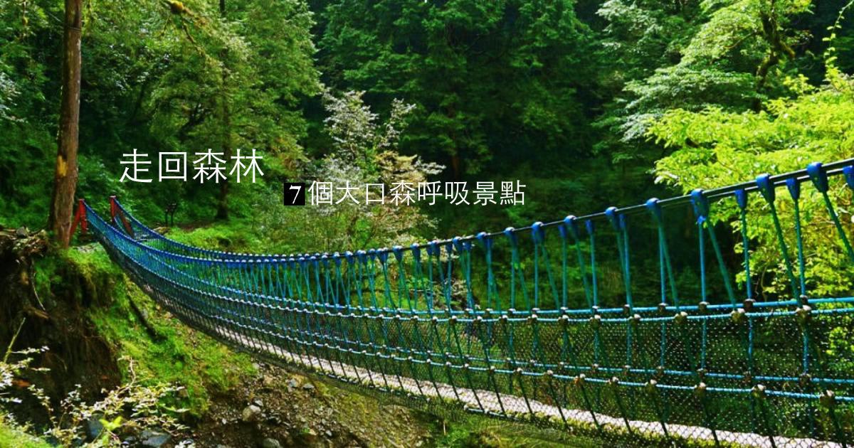 全台森林之旅 遠離城市,森遊七個綠意大口呼吸的境地