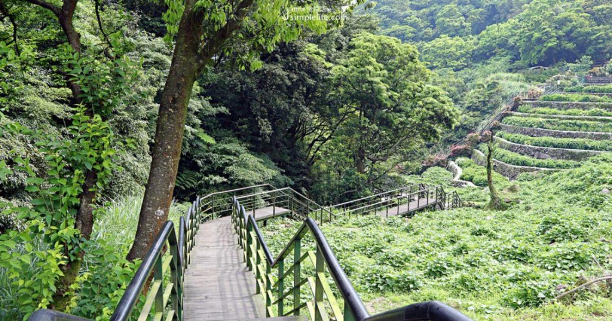 搭公車來陽明山旅遊,竹子湖健行、大梯田花卉看群山在四季的變化